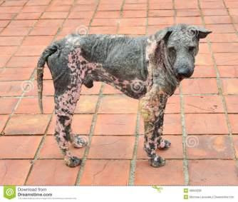 dog-skin-leprosy-ugly-48943936.jpg